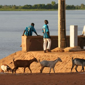 Small ruminants source of livelihoods in Mali