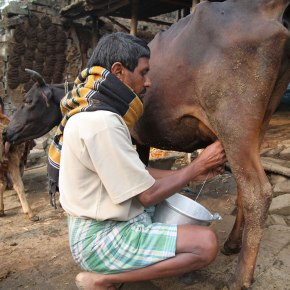 Affordable milk for India'spoor