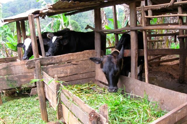 Tanzania dairy