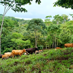 Climate-smart sustainable intensification: a business strategy for small cattle farmers in Central America