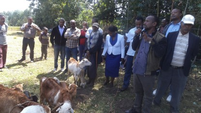 Ewes and lambs born through AI